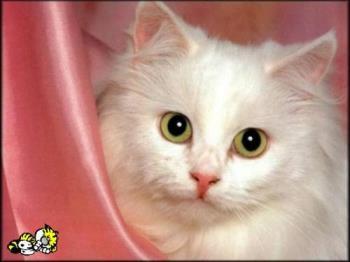 !! - cat