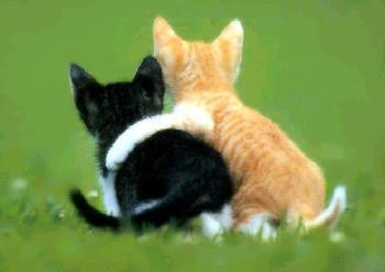 kitty friends forever - cute kitten friends