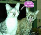cats - cats