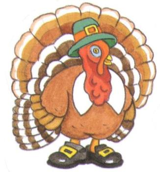 turkey - turkey