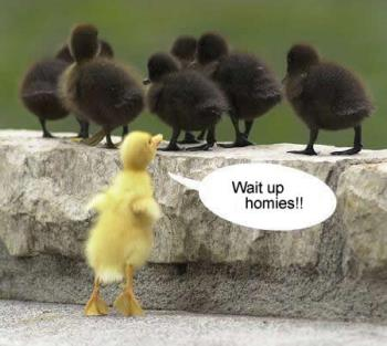 homies - another funny pic