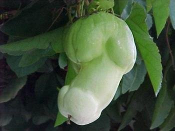 fruit - fruit