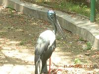 Crane - Photographed at Mysore Zoo