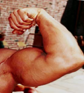 Muscles - Big Muscles