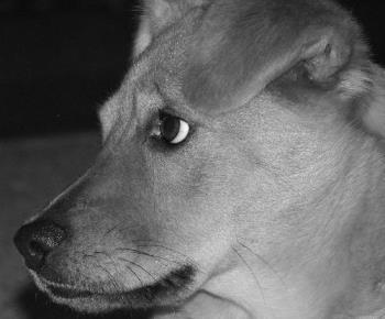 Dog - My puppy.