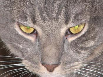 Cat - my cat