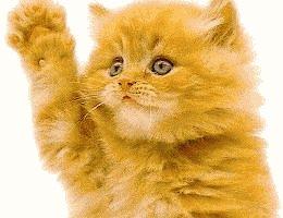 Kitty Wavin HI - Kitty waving Hi