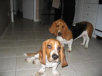Bassetts - my two girls