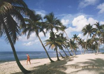 beach shore - beach shore