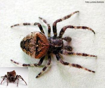 spider - dangerous spider