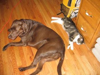 cat dog - cat dog