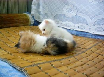 Two of my cats - two of my cats.This picture was taken in their kitten time.very cute.