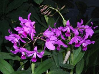 Orchids - This is a close up of some orchids that I saw at the Jardin Botanique in Montreal, Quebec.