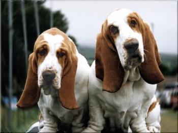 i like dogs - twin dogs