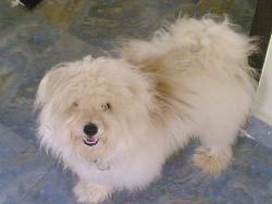 pet - my dear renny