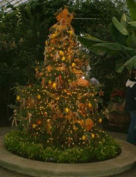 Christmas tree - This was taken at the Pittsburgh winter flower show.