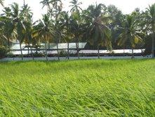 a paddy field - a paddy field