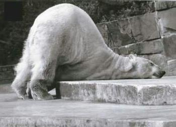 EXHAUSTED..LOL - Tired bear but cute!