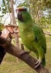 Parrot - Parrot