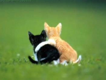cat friends - a great cat picture