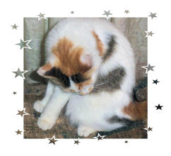 Iris - my cat