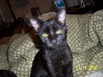 my spooky - spooky, my cat