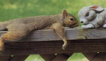Squirrel Falling In Love - A picture of a squirrel falling in love with a rabbit figurine