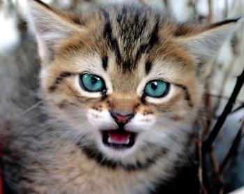 Who belled the Cat? - Angry!!!!!!!!!!!