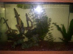 My Aquarium - This isn't a great pic of my aquarium, but it gives you a good idea of what it looks like.