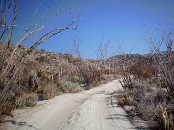 Ocotillo Promenade - This is a digital photo taken on the Pinyon Mountain road at about the 3.5 mile mark.