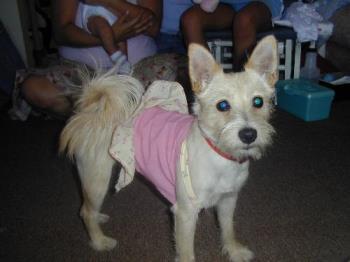 Butter - My doggie