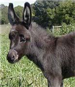 Donkey - Donkey