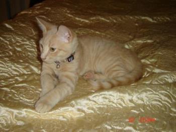 Tigga - This is my kitten Tigga