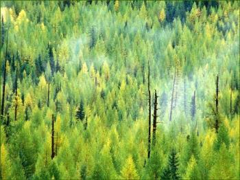 nature - greens