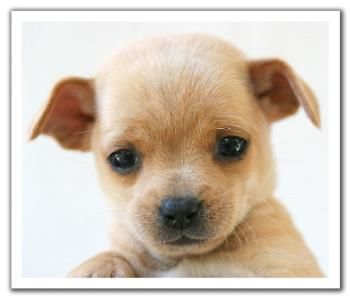 Puppy - A small child of a dog
