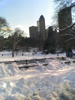 Central Park in the snow - This is a picture I took when I went to New York in February 2006. The day after a massive blizzard we took a carriage ride around a snowy Central Park. It was magical!