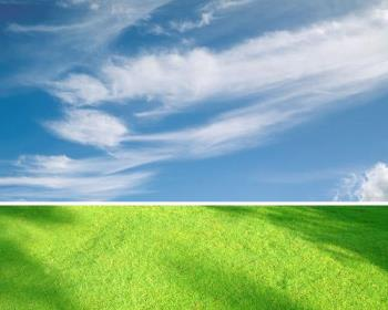 grass and sky - grass and sky