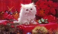 kitten - kitten