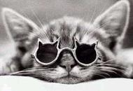 Kitten - Cat