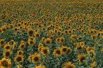 flowers - flowers
