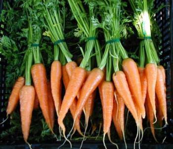 Fresh Carrots - Fresh Carrots