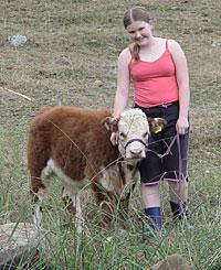 miniture cows - miniture cows