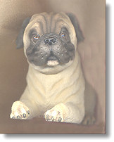 I love pugs! - aren't they cute