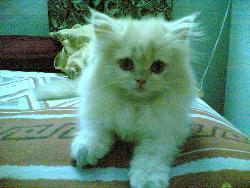 Mexy - so cute