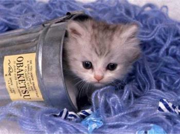 Kitten in a Can - Kitten in a Can