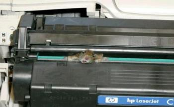 Mouse - The Mouse struk inthe printer