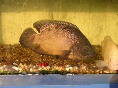 fish - Photographed in mysore acquarium