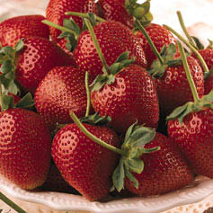 strawberries - these are th fruits which are avilble in the cold areas and these will be availble for a period of two months