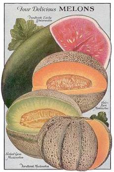 melons of all type  - these are the fruits which wil give us a relief from the sweat and they have aproperty of making the fresh nes and they will make the body cool