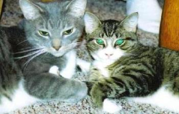 My cats - my cats